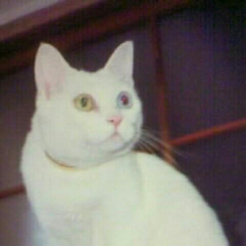 Naito Yuko